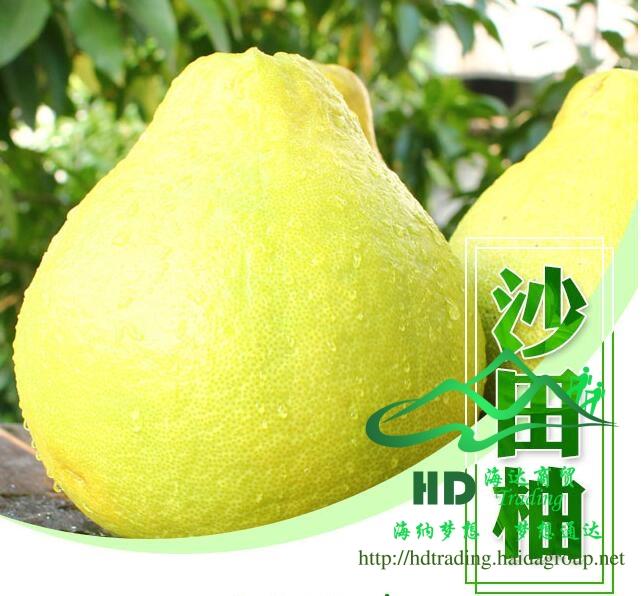 沙田柚(梅州金柚)